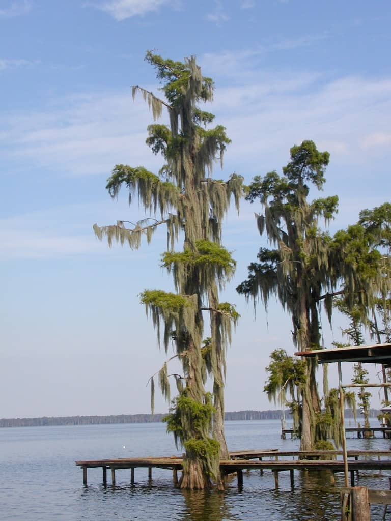 Lake Verret Camp View The Grave Blogger